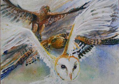 Kestrels and Owl Watercolour/Gouache painting by Amanda Barrett